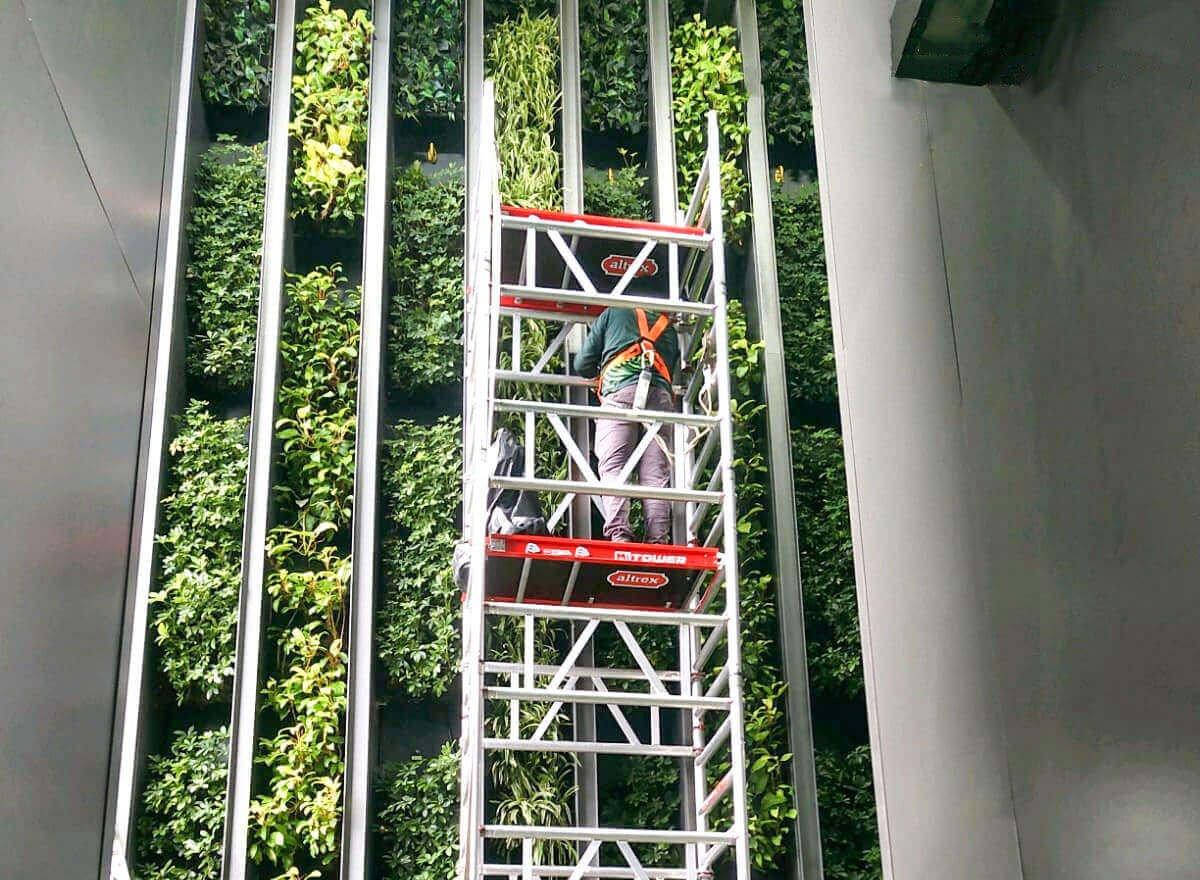 Echelon Green Wall Maintenance